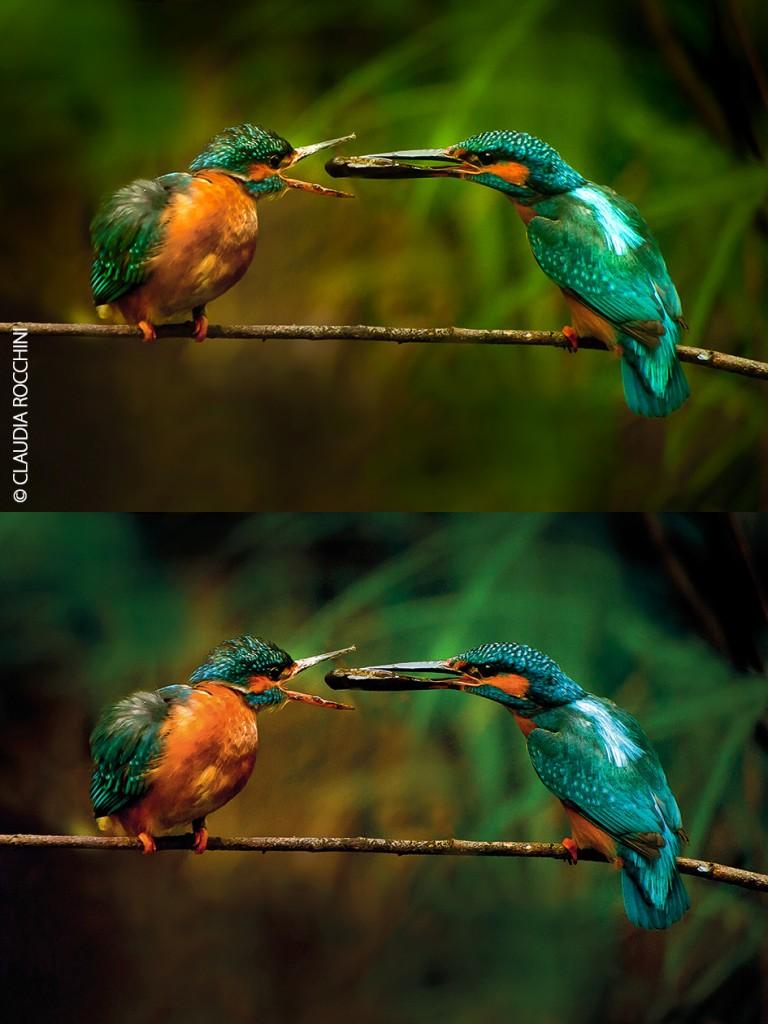 L'originale ha colori ampiamente fuori dal gamut CMYK. In questi casi è essenziale lavorare con il fotografo a fianco: fino a dove ci si può spingere? Quanto è possibile illudere l'occhio di stare osservando qualcosa di più verde-azzurro di quello che è possibile stampare? Quanto possiamo staccare i soggetti dallo sfondo?