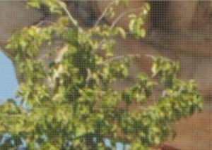 Un dettaglio dell'immagine ingrandito al 700%. Questi sono circa 32.000 pixel: che succede se ne modifichiamo uno, come prima?