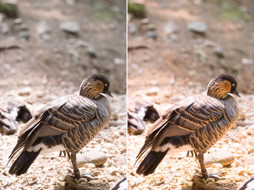 22_CB_Uccello_Confronto